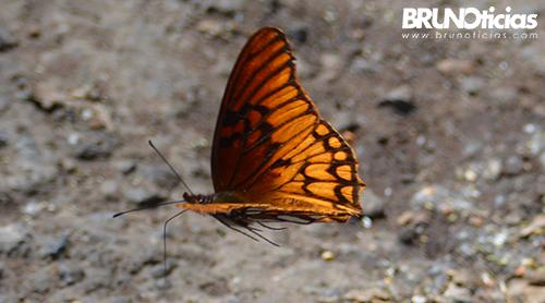 monarcas-churintzio-last