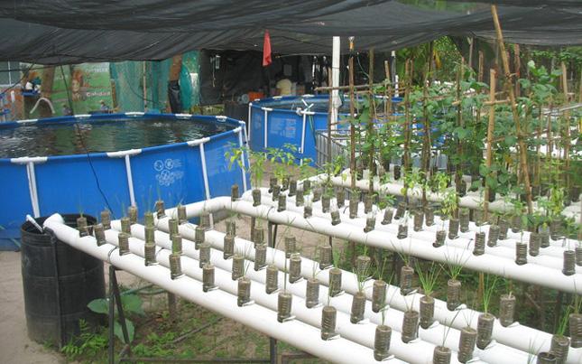 Crean sistema de cultivo para peces y plantas en casa for Cuidado de peces