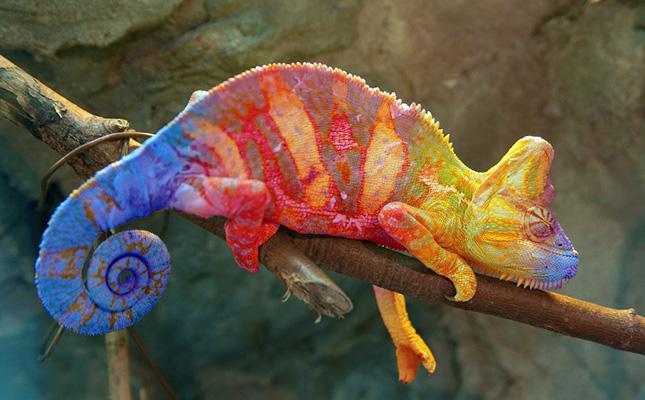 Resultado de imagen para camaleon