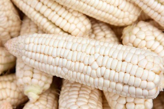 precio de garantía maíz