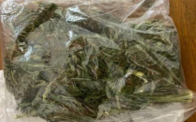 Penjamillo Marihuana