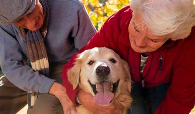 animales de compañía adultos mayores