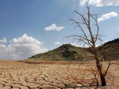 cálido 2019 sequía