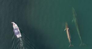 Mamiferos Marinos Baja California Ballenas