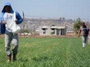 suelos fertilización
