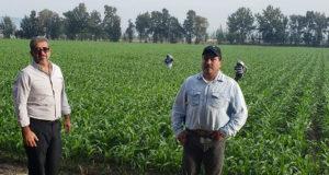 fertilizante Yurécuaro