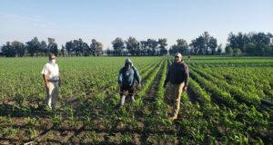 SEDRUA Yurécuaro Agricultura Sustentable
