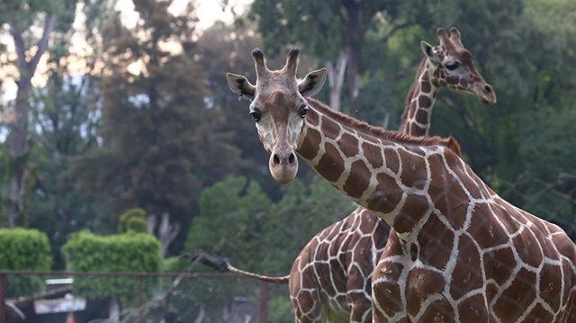 zoológico de Morelia
