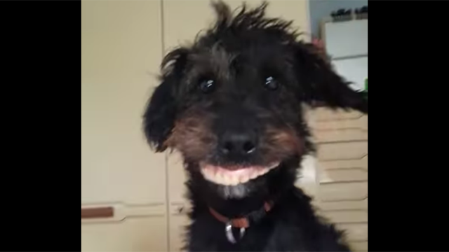 dentadura postiza perro