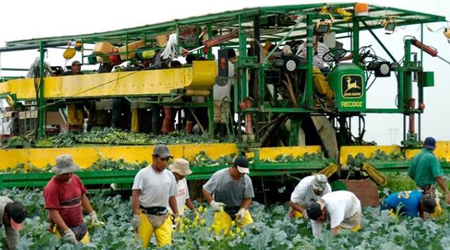 trabajadores agrícolas temporales CANADÁ