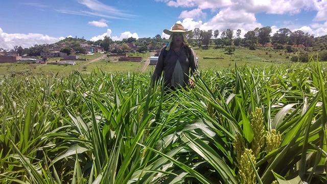 Numarán agricultura sustentable