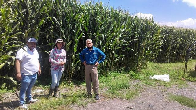 maíz agricultura sustentable