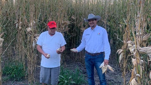 sustentable Penjamillo SEDRUA Agricultura