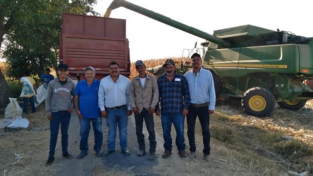 Numarán maíz 17 toneladas