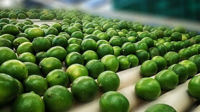 limón Michoacán 1
