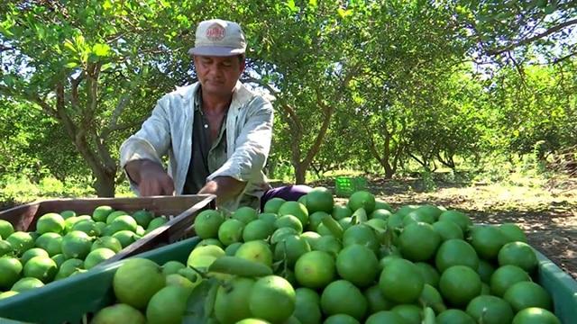 limón Michoacán 3