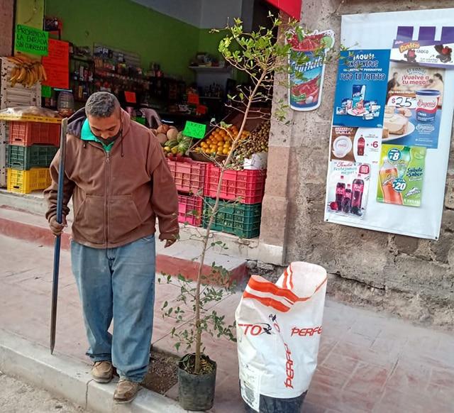 árboles Hidalgo La Piedad 2